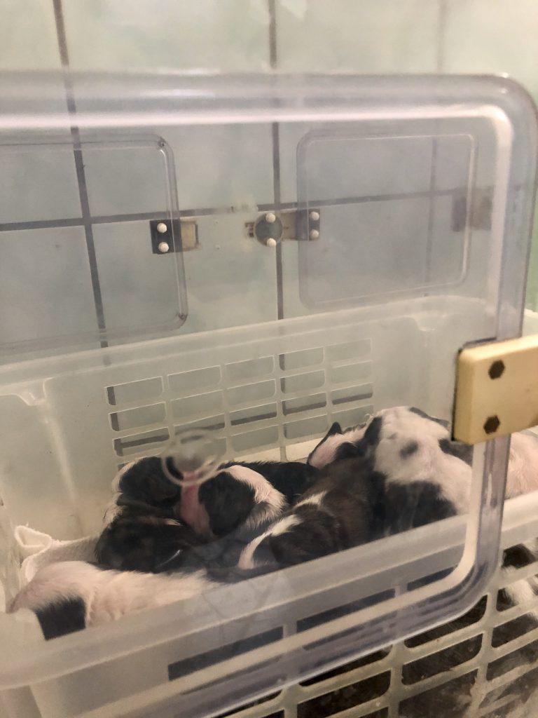 Inkubátorban